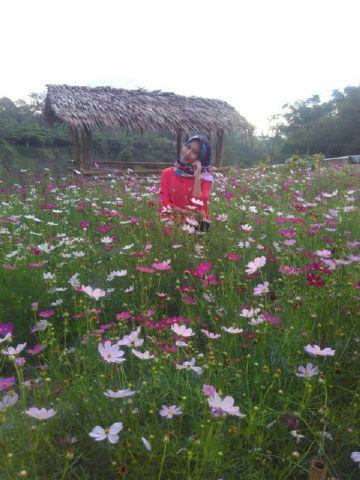 kebun bunga curup