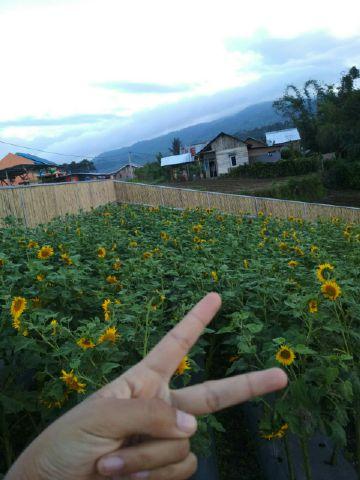 kebun bunga dsandana 88