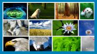 Situs Untuk Mendapatkan Gambar Bebas Hak Cipta
