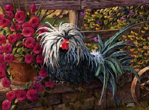 ternak ayam hias