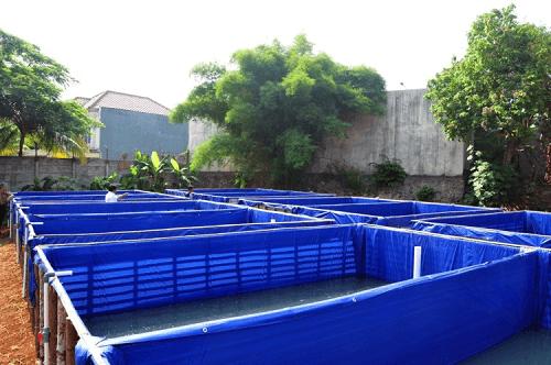 ternak lele kolam terpal