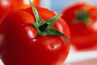 manfaat tomat untuk ayam