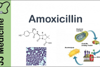 manfaat amoxicilin untuk ayam