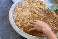 Membuat Racikan Pakan Ayam Bangkok