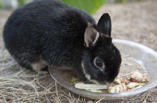 Nafsu Makan Kelinci Meningkat