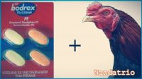 Bodrex Flu dan Batuk Untuk Ayam