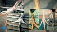 Sisik Kaki Ayam Bangkok Paling Disukai